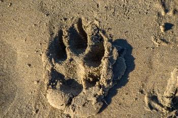 Canine Coast 3