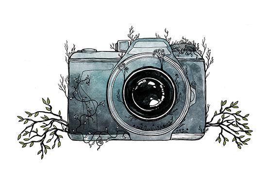 art prints - Nature Shot by BreeAnn Veenstra