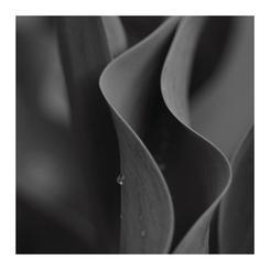 Tulip Curves