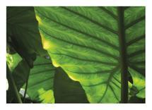 Underbelly of Green Lea... by Amy Stevenson Wilson