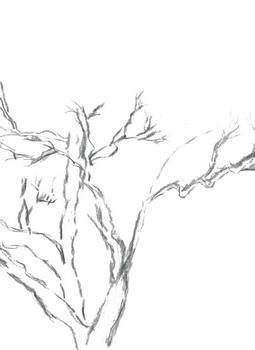Winding Willow