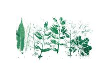 Forest Foliage by Jessica Mighton