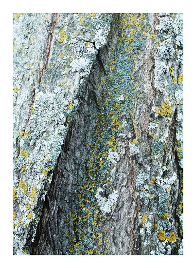 art prints - Lichen by Karen Kaul