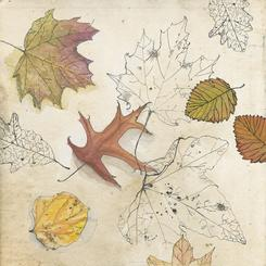 Autumn Leaves Collection (3 of 3)