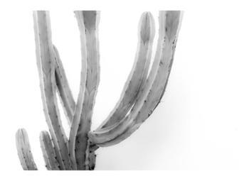 Moorten Cactus Study 2