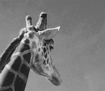 Graphic Giraffe