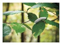 Fuzzy Caterpillar by Heather Miller