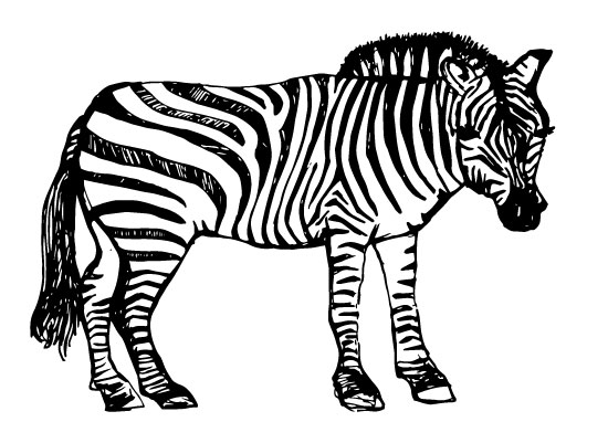 art prints - Show Me Your Stripes by Courtney Hoover