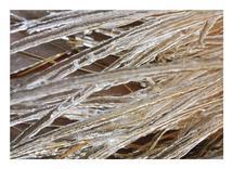 Icy Glass Coated Orname... by Nicole Winn