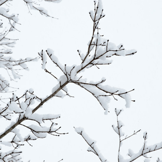 art prints - Snow covered winter branches by Heather Fuller
