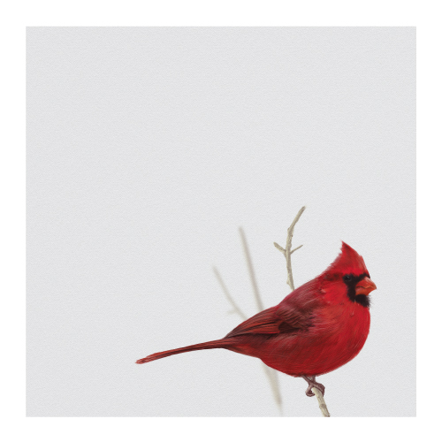 art prints - Bird One: Cardinal by Colin Stuart