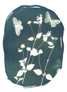 Golden Blue Verbena