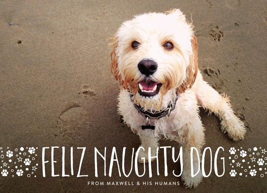 holiday photo cards - naughty dog by Erin Deegan
