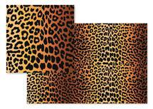 Cheetah by Emma Marson