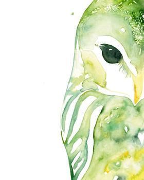 Owl in Green