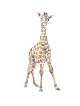 Baby Giraffe Watercolor