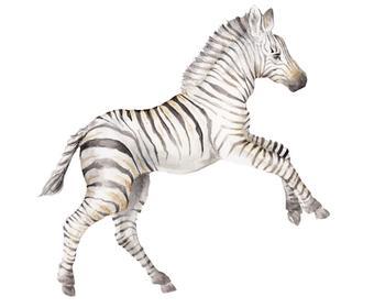 Baby Zebra Watercolor