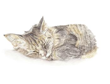 Sleepy Kitten Watercolor
