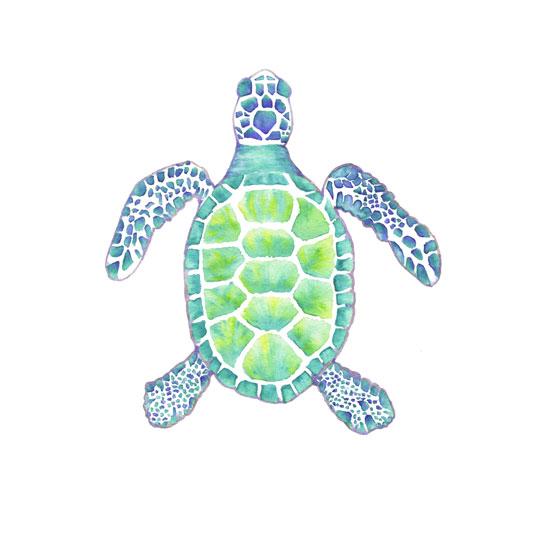 art prints - Sea Turtle by Kelly Cline