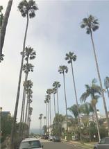 Palm Tree Boulevard by Kendal Leffler