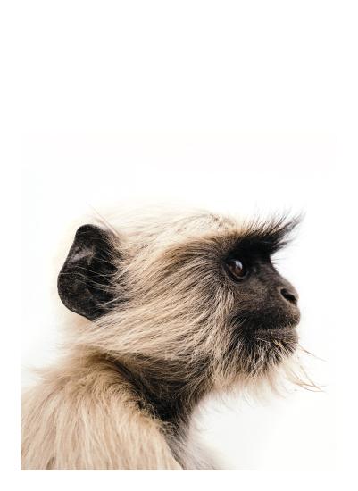 art prints - Monkey See by Kamala Nahas