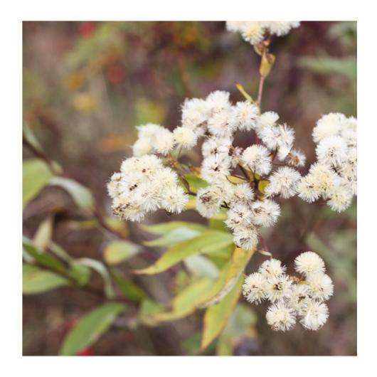 art prints - Fuzzy Wildflowers by Gray Star Design