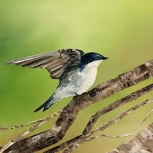 Tree Swallow by Laura Blue Palmer