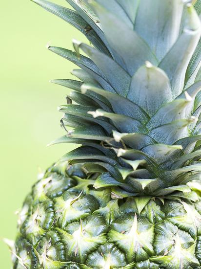 art prints - Pineapple Sunshine by Jennifer Mckinnon Richman
