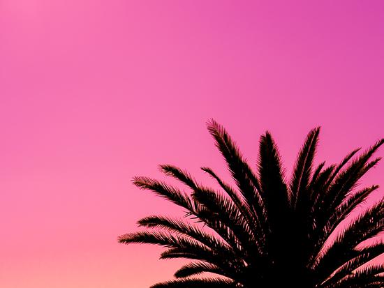 art prints - Pink Palms by Jennifer Mckinnon Richman