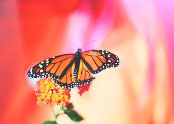 Butterfly Streaks