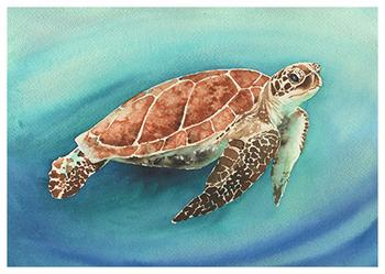 Sea Turtle Voyage