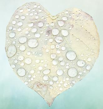 Rainy Day Heart