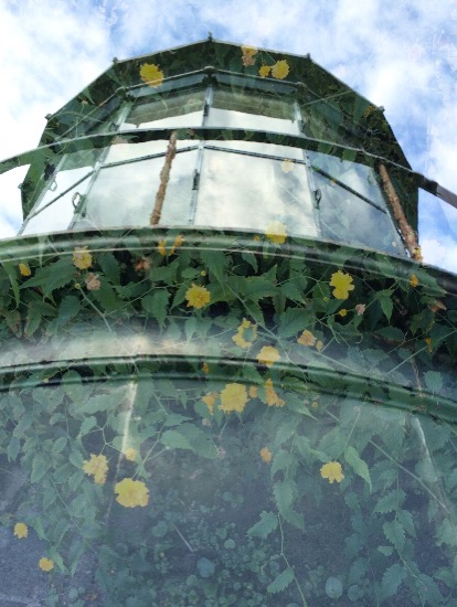 art prints - Lighthouse of Flowers by Carrie Speer