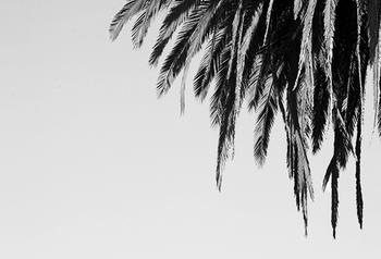Black and White Palms 1