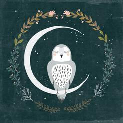 Moon and Owl