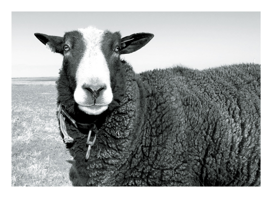 art prints - ewe + me by Leslie Borchert