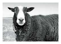 ewe + me by Leslie Borchert