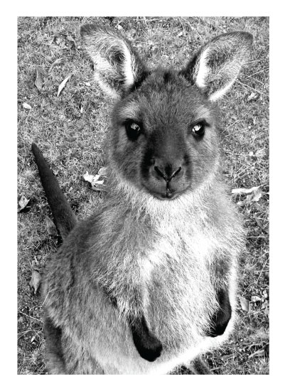 art prints - hello joey by Leslie Borchert