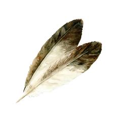 Two Eagle Feathers