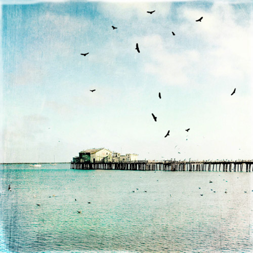 art prints - Pier Pressure by Regan Daniels