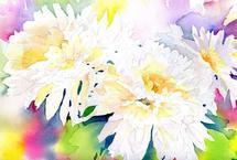 Mums in white by Melissa Hyatt