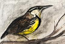 EASTERN MEADOW LARK by Lauren Rose Jackson
