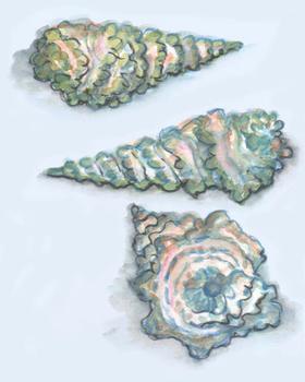 Shell Treasures