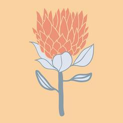 Protea Joy