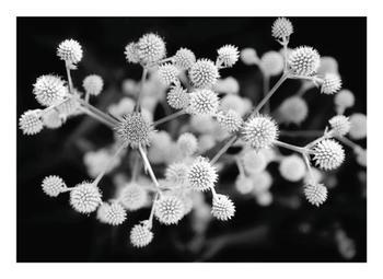 Molecular Nature