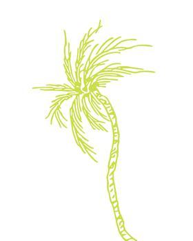 Windward Palm Tree