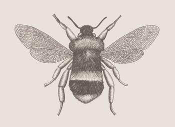 Stylized Bugs: Bee