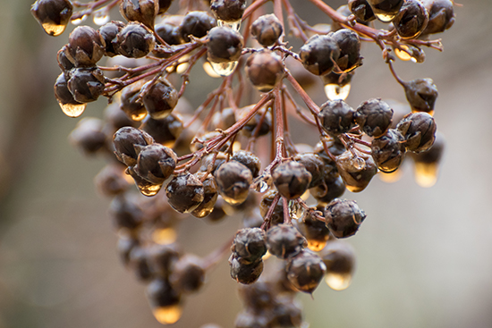 art prints - Golden Berries by Looking Left