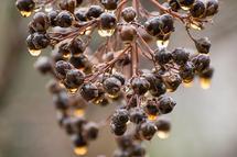 Golden Berries by Looking Left