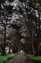 Tree Tunnel by Kelsey Elliott